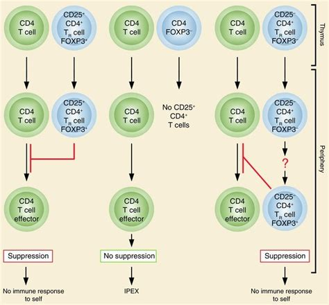 Photo-immunotherapy approaches for cancer | Cancer Biology
